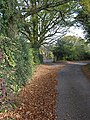 Country road on the eastern fringe of Howle Hill - geograph.org.uk - 609721.jpg
