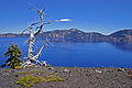Crater Lake Wizard Island Pines 2.jpg