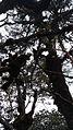 Creeps on trees.jpg