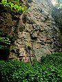 Creswell Gorge, Creswell Craggs, Notts (103).jpg