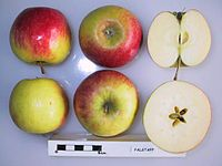 Cross section of Falstaff, National Fruit Collection (acc. 1972-184).jpg