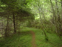 Cummins Creek Ridge Trail.jpg