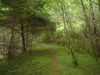 Cummins Creek Wilderness - Cummins Creek Ridge Trail
