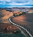 Cypress road in Toscana (39693331021).jpg