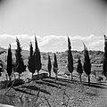 Cypressen buiten de stadsmuur van Jeruzalem, Bestanddeelnr 255-5143.jpg