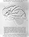 D. Ferrier, The functions of the brain. Wellcome L0028657.jpg