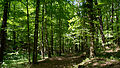 D08 Tiefental Königsbrück Naturschutzgebiet (10).jpg