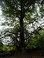 DSCN6214 Helensburgh Duchess Wood Fairies Meeting Place.jpg