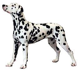 Dalmatien.jpg
