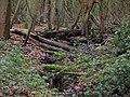 Damp Woodland - geograph.org.uk - 663454.jpg