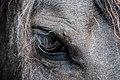 Dark horse eye (Unsplash).jpg