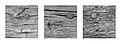 Date Nails (22599379581).jpg