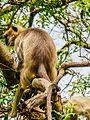 Daulatabad, Aurangabad - panoramio (31).jpg