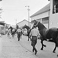 De paarden voor de koninklijke calèche in Willemstad, Bestanddeelnr 252-2743.jpg