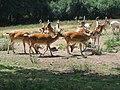 Deer Sanctuary - geograph.org.uk - 883649.jpg