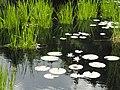 Denver Botanic Gardens - DSC00980.JPG