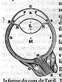 Descartes; Optics- dicourse on methods...The Eye Wellcome L0012001.jpg