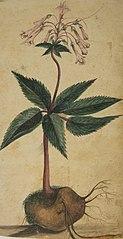 Desenho de Plantas - Álbum M A B A D - Prancha N.2