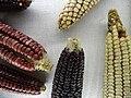 Detail of Maize Cobs - Museo de Artes Populares - Patzcuaro - Michoacan - Mexico (20559499231).jpg