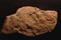 Dickinsonia costata-Edicara (Australia)-Muséum Toulouse.png