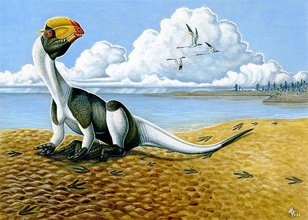 Depiction of Early Jurassic environment preserved at the St. George Dinosaur Discovery Site at Johnson Farm, with Dilophosaurus wetherilli in bird-like resting pose Dilophosaurus wetherilli.jpg