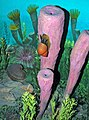 Diorama of a Pennsylanian seafloor - Worthenia gastropod, sponges, algae 2 (44728177895).jpg