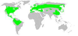 Native distribution of salamanders (in green)