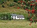 Dolgoch Hostel through the rowan trees, Cwm Tywi, Ceredigion - geograph.org.uk - 1502149.jpg