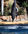 Dolphin Cove 55.jpg