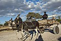 Donkey cart, Northern Cape (6252678655).jpg