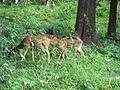 Dotted Deers1.jpg