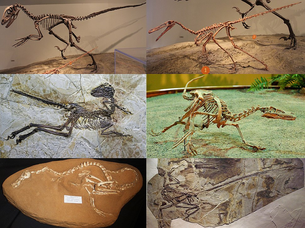 Dromaeosauridae Diversity