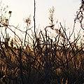 Dry plants (21270329708).jpg
