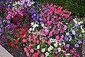Dubbo - Main St Flowers-1+ (2150832937).jpg