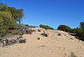 Duna de les dunes de Guardamar.JPG