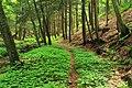 Early-Morning Hike (5) (14516077357).jpg