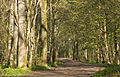 Early Spring Growth in Stanmer Park 2.jpg