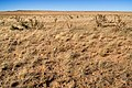 East of the Hueco Mountains - Flickr - aspidoscelis (3).jpg