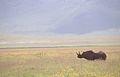 Eastern black rhino (6880954411).jpg
