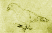 Eclectus infectus-MalaspinaExpedition1793-Yellow.png
