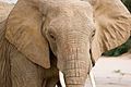 Elephant (3690384760).jpg