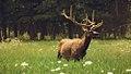 Elk Grove Village.jpg