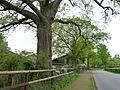 Ellerhoop, Naturdenkmal 44-01, 2 Stieleichen, Bild 01.jpg