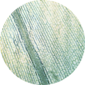 Elodea chloroplasts 100×.png