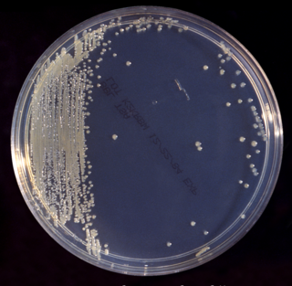 <i>Cronobacter sakazakii</i> species of Gammaproteobacteria
