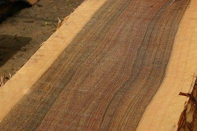 Timber Trees Of Gauteng Wikipedia