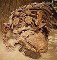 Euoplocephalus Royal Tyrell.jpg