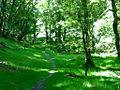 Exmoor forest.jpg