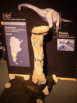 Patagotitan Mayorum Wikipedia La Enciclopedia Libre