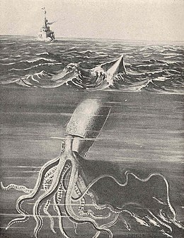 List of giant squid specimens and sightings - Wikipedia